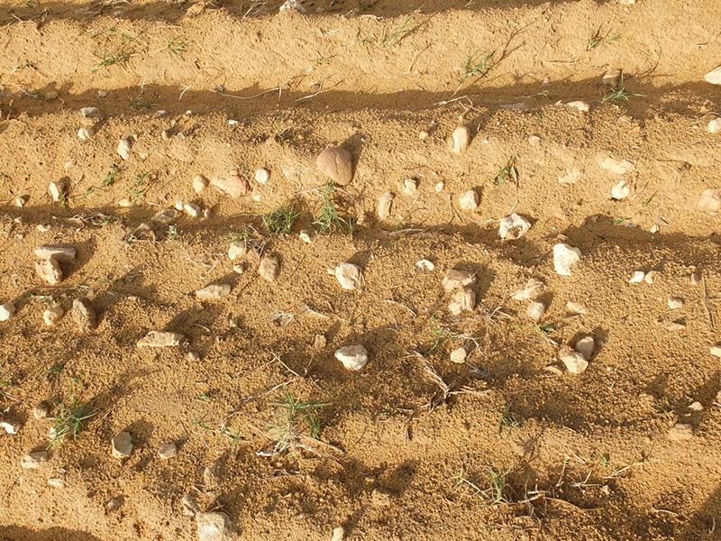 la terre doit être calcaire et légère